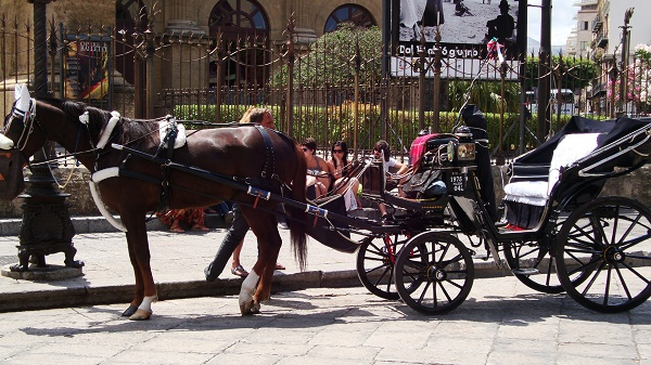 A horse and cart ride