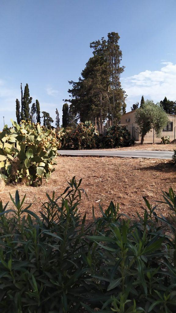 Typical Sicilian vegetation