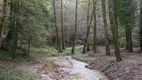 The forest in Serra San Bruno
